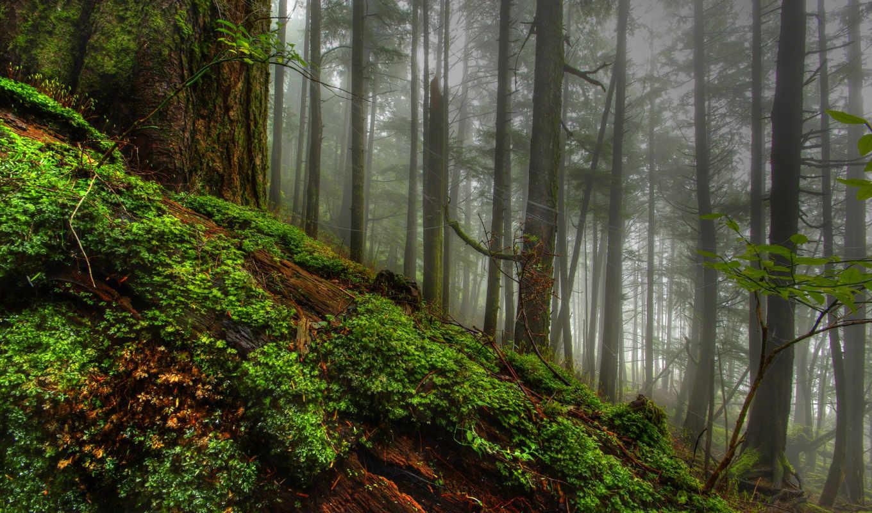 мох, дерево, природа, трава, лес, деревья, картинка, картинку,