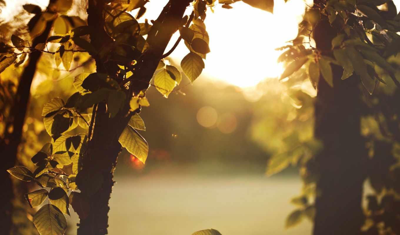 природа, категория, листья, размере, ветки, свет, макро, горы, деревья,
