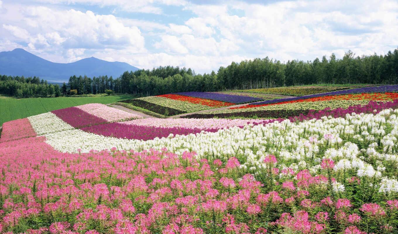 поле, цветы, лес, небо, цветов, горы, summer, поля, картинка,