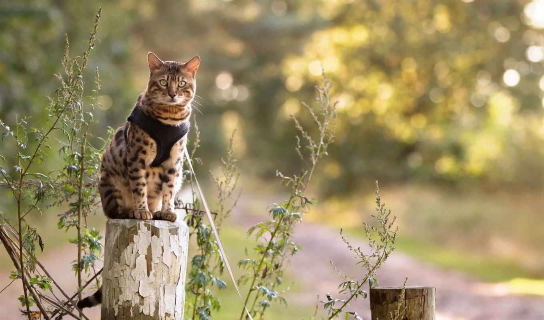 кот, природа, random, изображение, cats, next, login,