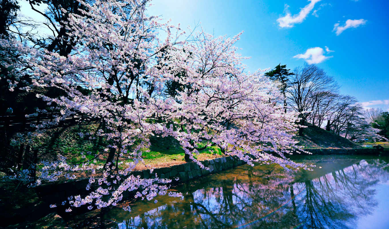 река, весна, landscape, разрешения, высокого, trees, лес, горы, кб, монитора, фотографий,