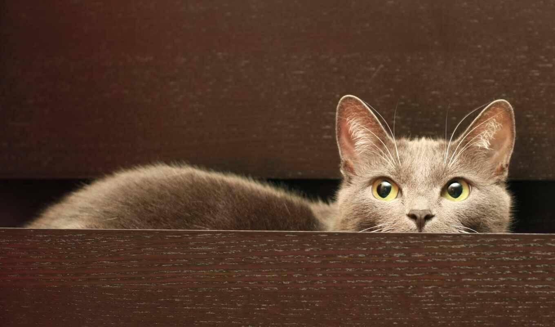 кот, поднос, choose, website, нужный, серый, котенок, animal
