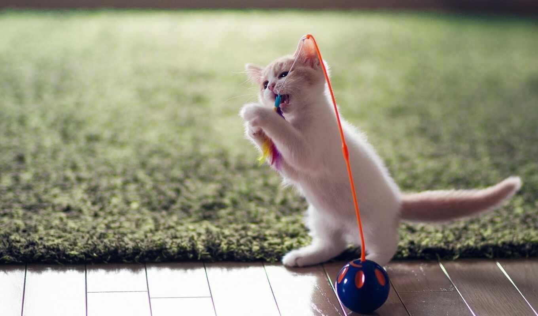 кот, play, toy, свет, котенок, playful, собака
