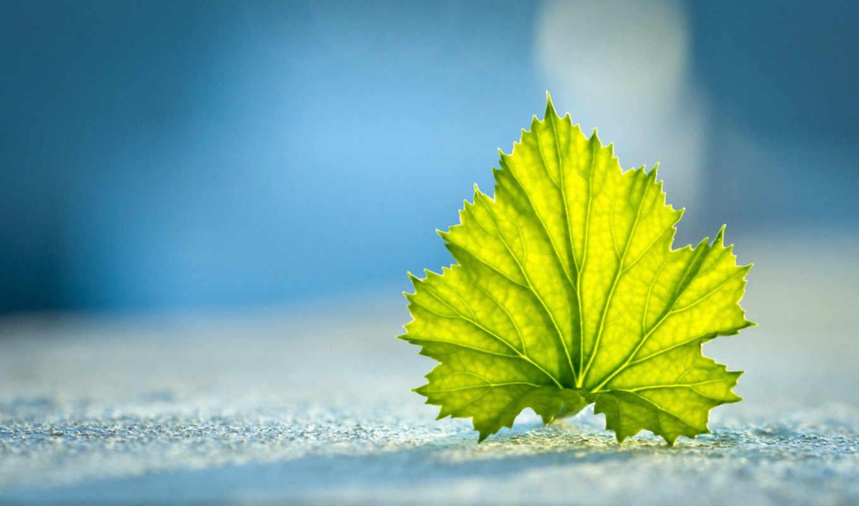 ,зеленый, лист, голубой,