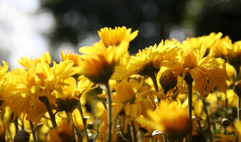 flowers, sun, цветы, belt,