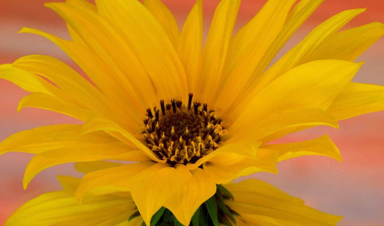 flowers, desktop, flower, картинка, you, gardens, yellow, bwua, artfotki, url, cvety, just, thank, pink, природа, background, click,