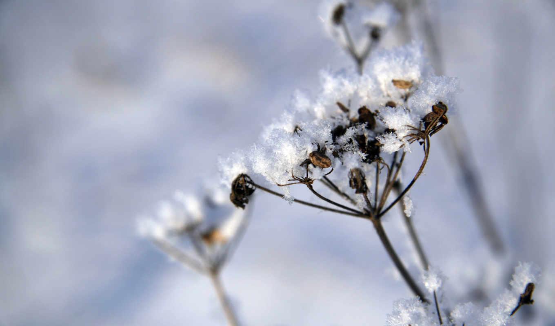 снег, plants, covered, растение, living, tough, photography, landscape, природа, wide,