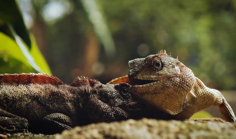 iguana, зелёный