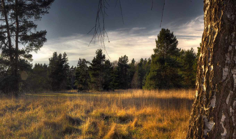 обои, поляна, лесная, полянка, лесу, рейтинг, голо