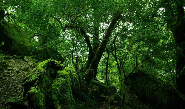 лес, деревья, природа,