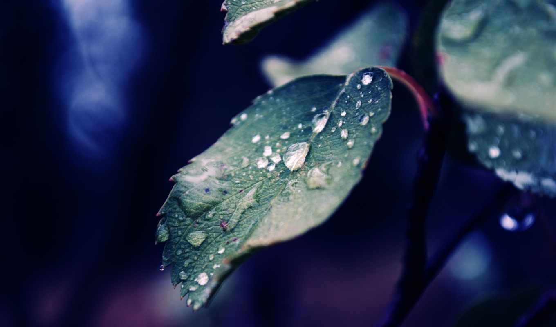 iphone, листья, дождь, full, природа, роса, осень,