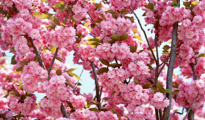 цветы, красивые, самые, июнь,