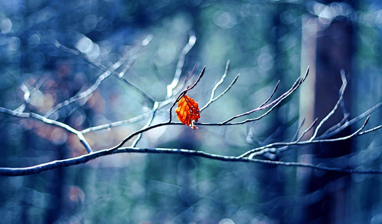 winter, природа, листочек, макро, боке, пейзажи,