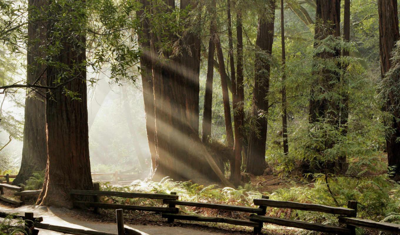 лес, дорога, лучи, тропинка, забор, woods, forest, muir, смотрите, nature, fence, лесу, предпросмотр, вышивки, đẹp, ảnh, природа,