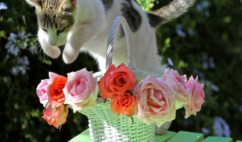 cats, flowers, красивые, цветы,