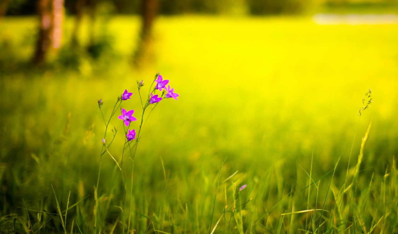 цветы, зарегистрируйтесь, contact, войдите, summer,