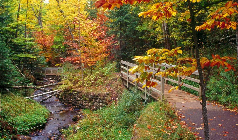 para, pantalla, fondos, imagenes, bosque, otoño, fondo, las, del,