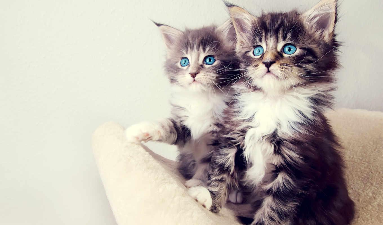 cats, котята, cute, дек, кот, коты, смотрят, котэ, усы,