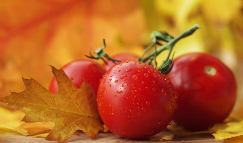 удобрение, комплексное, удобрения, топерс, растений, минеральное, листьях, производителя, производитель, реализует,