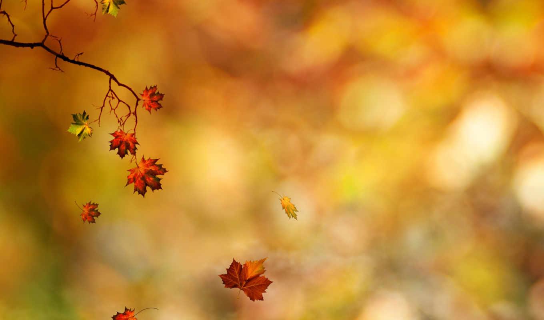 осень, листья, ветка,