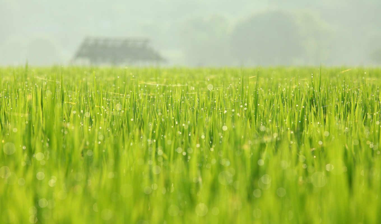 природа, май, весна, роса, зелёный, поле, huang, август, photography,
