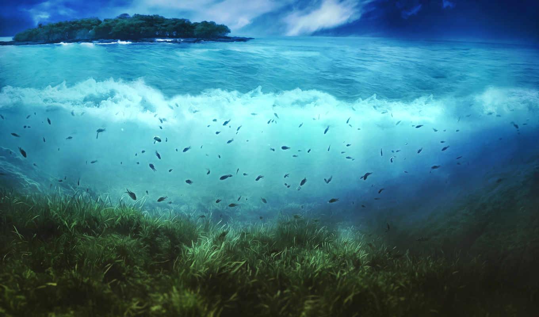 underwater, world, море, bottom, water, растительность, pisces, остров,