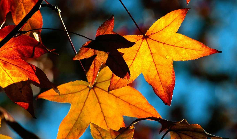leaf, пасть, категория, природа, wallpaperz, amazing, one, id,