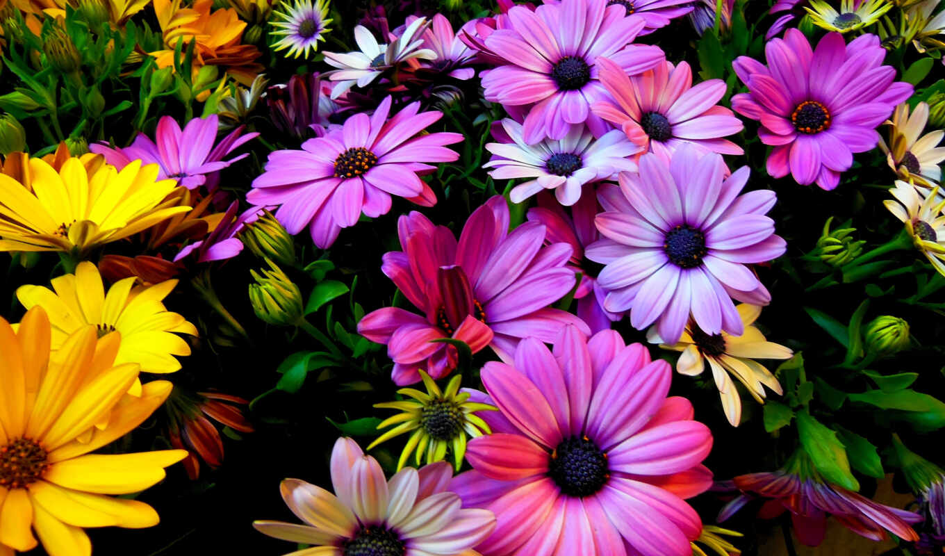 flowers, photos, природа, цветы, замок, android,
