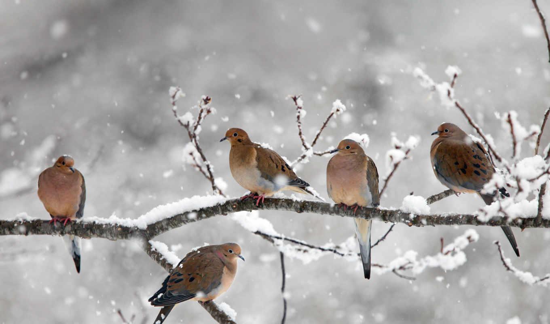 дневник, природа, dove, картиники, бесплатные, дугина, eugenia, птицы, траур, winter,