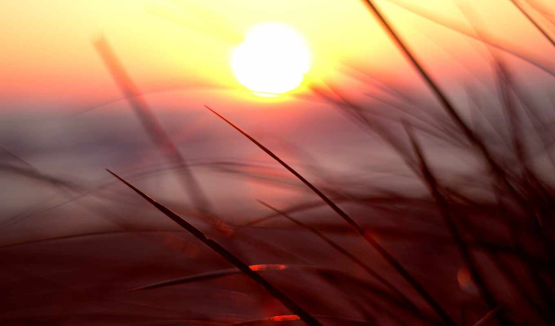 sun, природа, makryi, закат, red, трава, greenery, небо