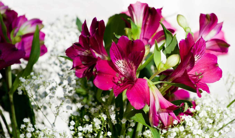 цветы, красавица, букет, other, цветов,
