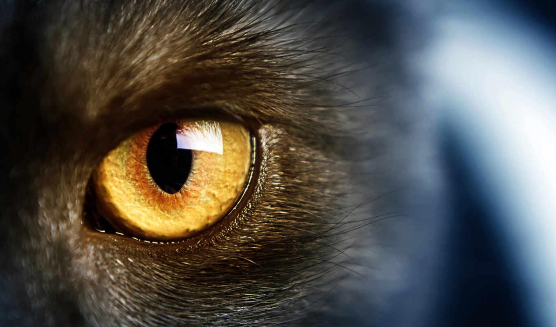 , глаз, зрачек, feline, свет,, кошки,