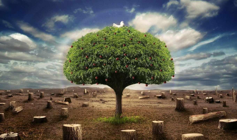 desktop, free, природа,