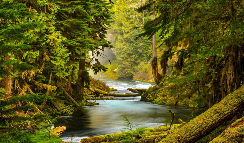 oregon, природа, река, лес, мох, mckenzie, trees, скалы, landscape,