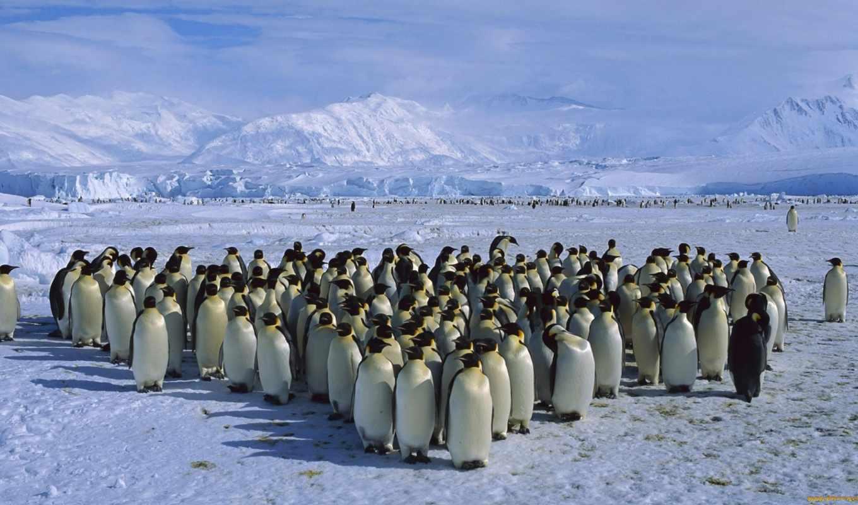 пингвинов, пингвины, антарктиде, пингвин, пингвинам, яndex, интересные, антарктики, антарктида, антарктиду,