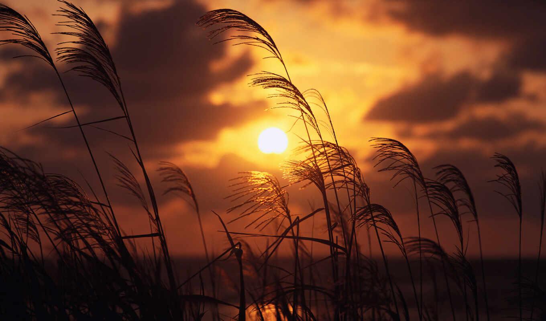 hd, поле, закате, from, wallpapers, theme, ficus, необычно, картинка, красиво, телефон, вид, которой, bild, today, der, красивая, тема, закат, помощью, украсить, разнообразить, new, ipad, природа,