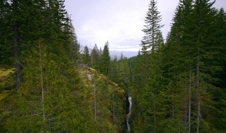 лес, речка, горы, картинка, картинку, поделиться, понравившимися, же, desktop, так, картинками, мыши, салатовую, кликните, кномку, кнопкой, левой,