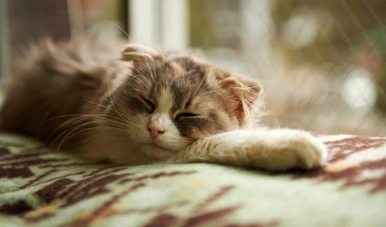 кошка, одеяло, спящий,