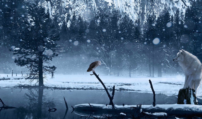 сова, озеро, зима, арт, снег, волк,