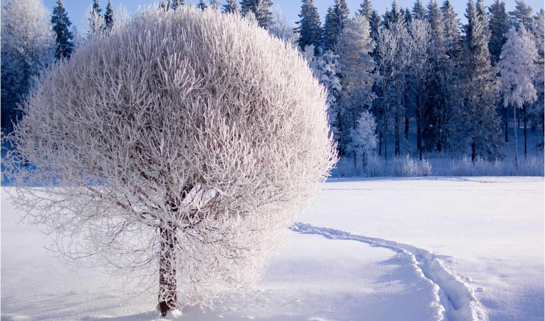 winter, природа, снег, иней, лес,