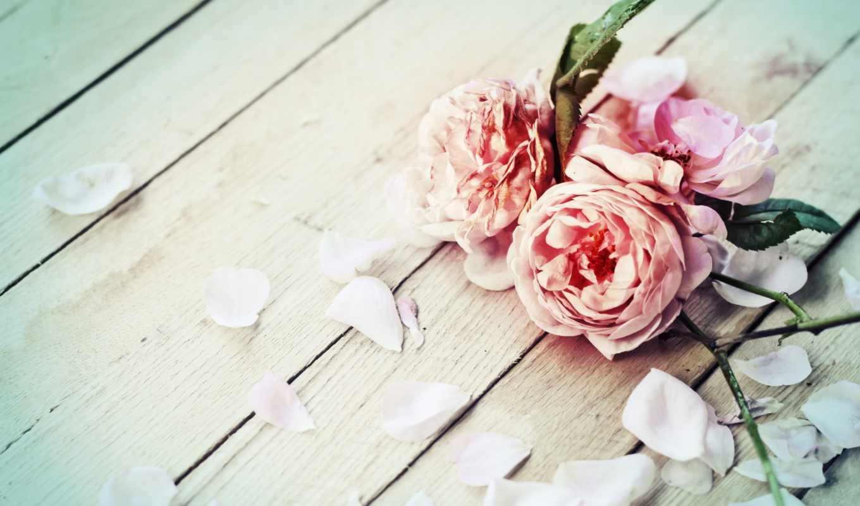 romantic, цветы, фон, розы, весна, you, flowers, февр, цветами,