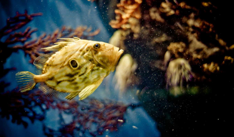 уровень, глаз, зоркий, ответы, fish,