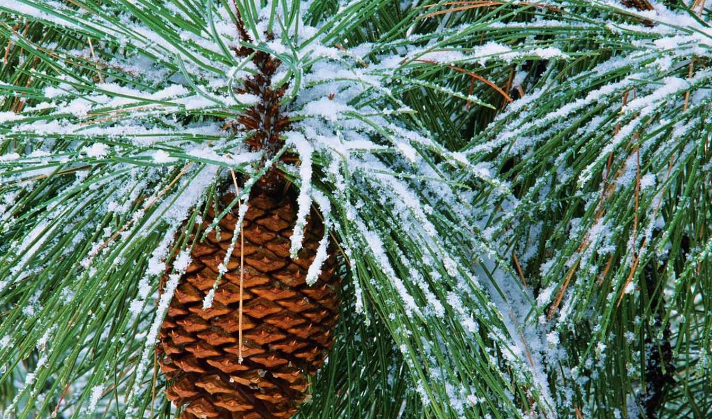 winter, красивые,