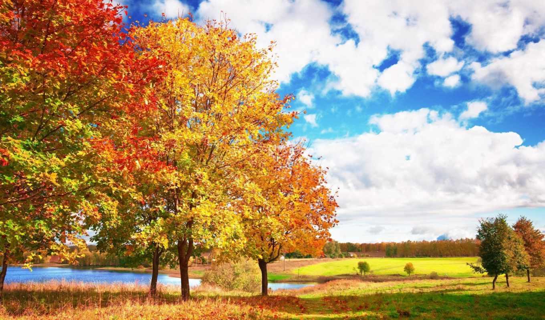 яркие, oblaka, небо, осень, деревя, голубое, eti,