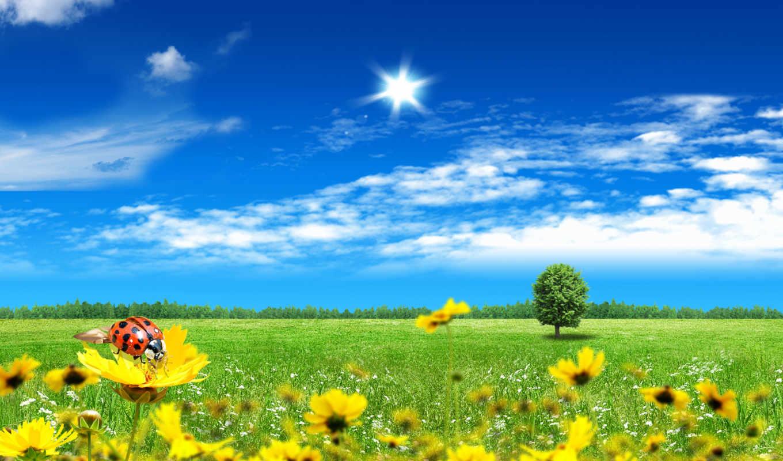 небо, божья, коровка, трава, поле, цветы, лес, oblaka, дерево,