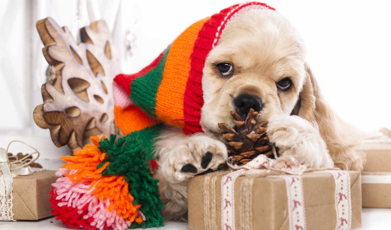 zhivotnye, собаки, год, new, spaniel, щенок, шапки, подарки,