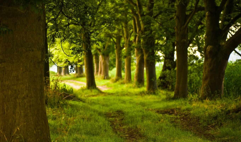 лес, summer, красивый, природа, лесу,