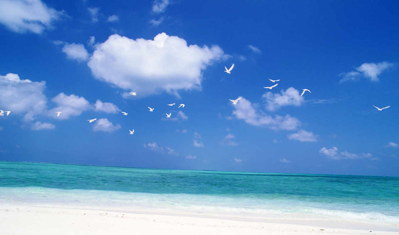 птицы, небо, море, природа, небе,