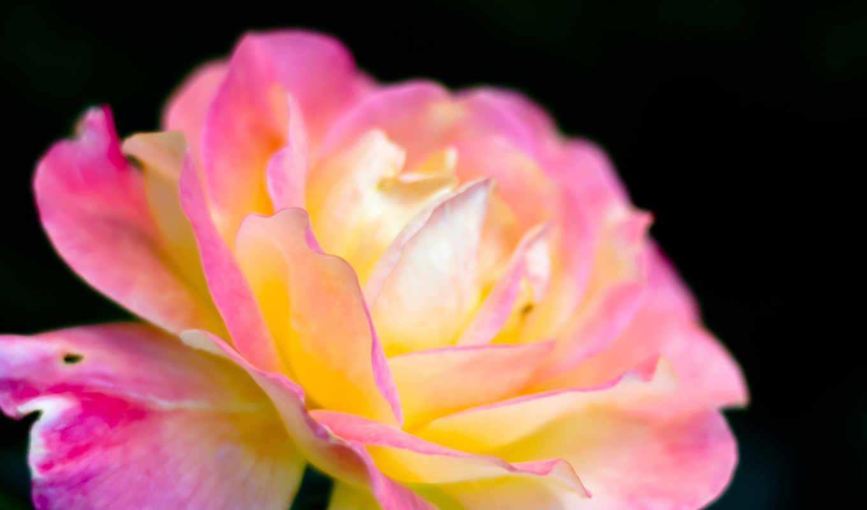 розовый, макро, иризация, картинка, картинку, мыши, кнопкой, салатовую, кликните, же, картинками, понравившимися, поделиться, так, левой, кномку,