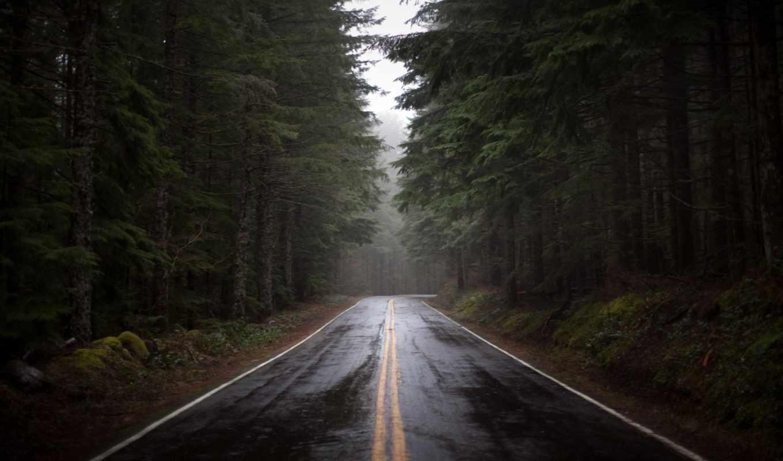 лес, yol,